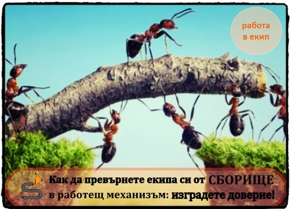 Ekip_doverie_b2b